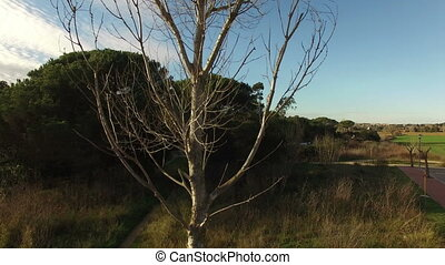 Deciduous Tree Aerial Drone View - Drone aerial view...