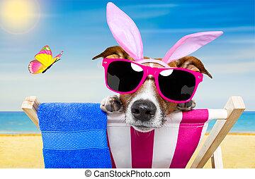 復活節, 假期, 狗