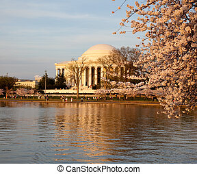 Jefferson Memorial behind cherry blossom - View of Jefferson...