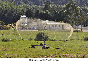 spraying effluent - Irrigator spraying out dairy effluent,...