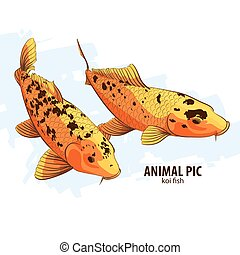 Orange Koi fishes on white background