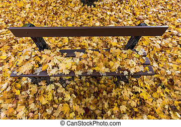 yellow leaves in autumn - yellow autumn leaves have fallen...