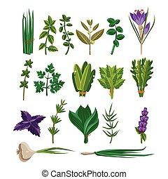 Cooking Herbs Collection Items Flat Vector Design On White...