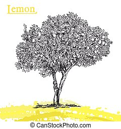 lemon tree sketch - hand drawn sketch lemon tree of on a...