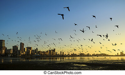 Durban Harbor with birds flying over - birds scattering in...