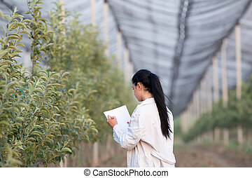 Woman agronomist in the orchard - Young woman agronomist...