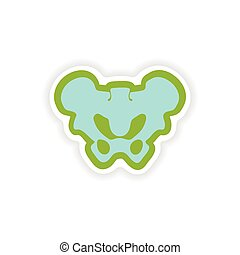 paper sticker on white background pelvic bones