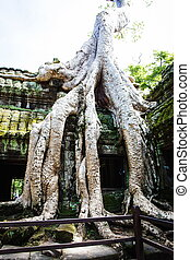 Tree Root in Angkor, Cambodia