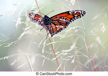Monarch butterfly on a yellow grass