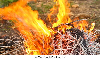 dry twigs on fire, close-up HD