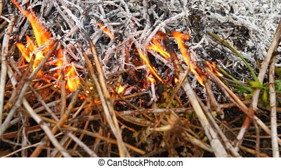 embers and ashes close-up