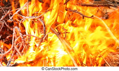 dry twigs on fire, close-up