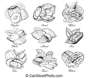 Engraved nuts isolated. Set of mixed nuts. - Isolated nuts...