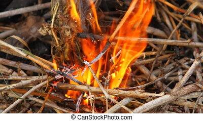 burning dry branches HD clode up