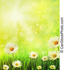 Fresh spring grass with daisies against golden