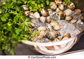 Fresh clams - Bowl of fresh clams with ice