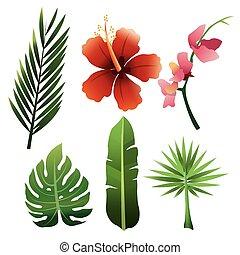 Foliage icon design - Foliage concept with icon design,...