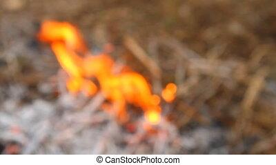 wildfire shot in blur background