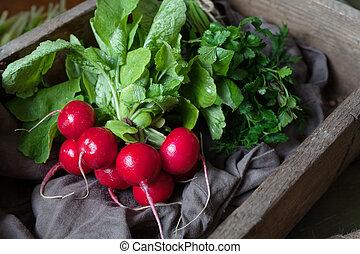 Fresh rustic harvest of radishes healthy vegetables in vintage basket