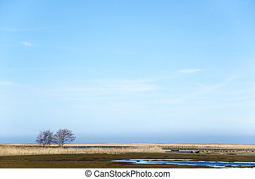 Trees and reeds in a wetland - Wetland with great reeds area...