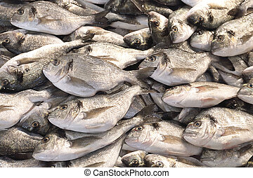 Bream - Fresh Sea Bream Catch of Fish at Market