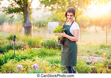 Gardener holding a seedling in flower pot, sunny nature -...