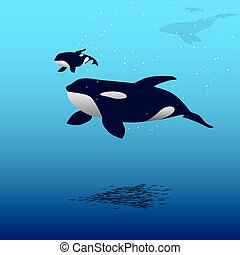 Orca whale - Vector illustration of a killer whale and calf...