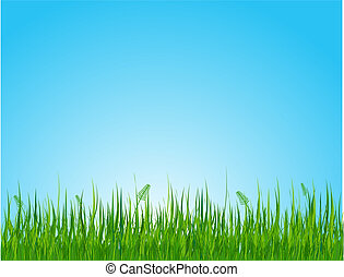 Grassy field  - Seamless illustration of summer grassy field
