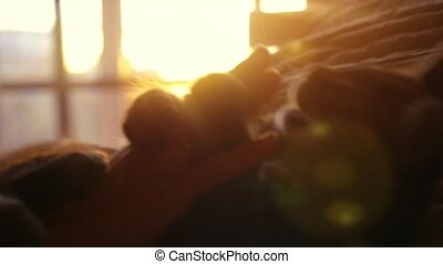 Woman plays with little kitten on a sunset background on the...