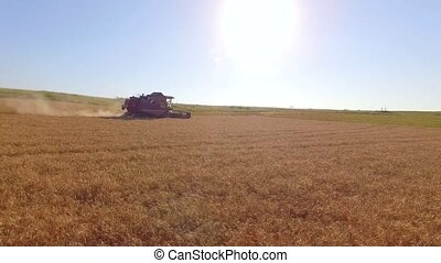 Machine Harvester Working On Ripe Wheat Field - AERIAL VIEW...