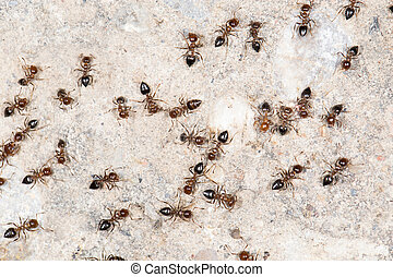 ants on the wall close-up
