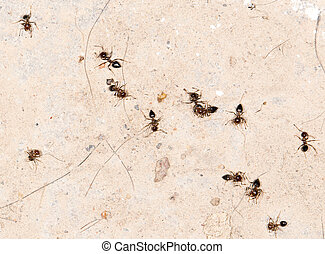 dead ants on the wall. close-up