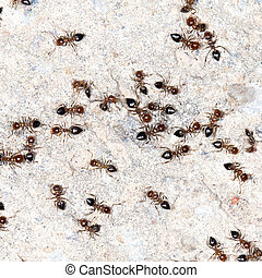 ants on the wall. close-up