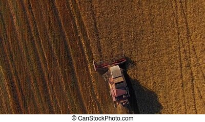 Rural Combine Working On Buckwheat Field - AERIAL VIEW The...