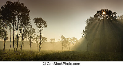 Foggy landscape in plains - Foggy landscape of meadow with...