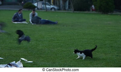 Bird and cat. - Brave dove bird bits tail of a cat. Humor at...