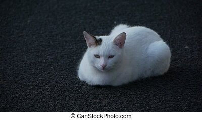 A Cute cat. - A sleepy cute cat lies down and tries to hear...