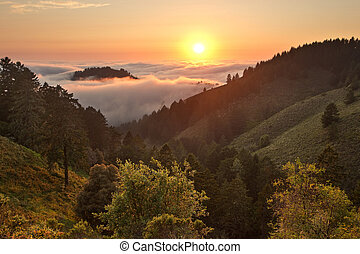 Dense Fog in California Foreset