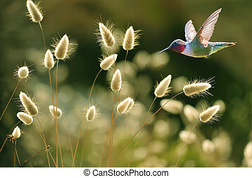 Hummingbird over green grass summer background - Hummingbird...