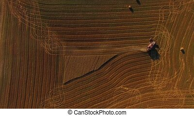 Harvesting Combine Finishing Working On Buckwheat Field -...