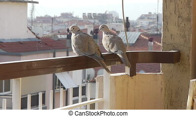 2 birds on balcony.