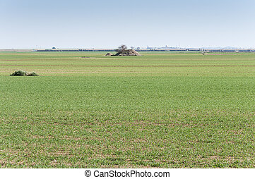 Barley fields in a system of dryland agriculture. Photo take...
