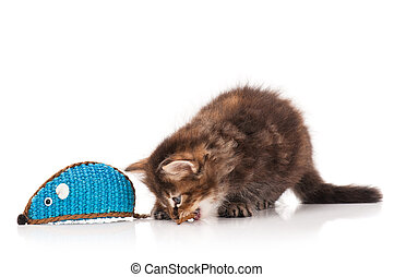 Cute siberian kitten with toy mouse isolated on white...