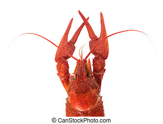 Prepared big crayfish isolated over white background cutout