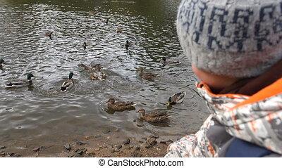 The Boy feeding ducks