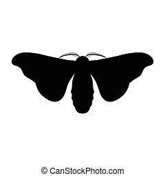 butterfly Bombyx mori. Sketch of butterfly. butterfly...