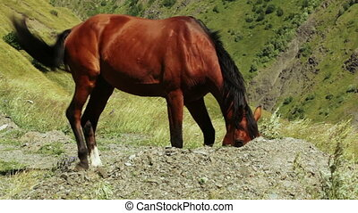 Home horse on hill