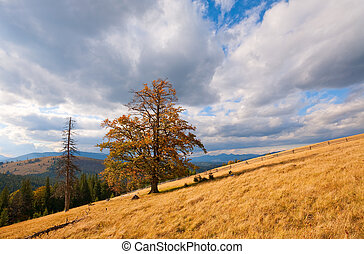 Lonely tree on autumn mountainside