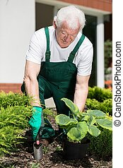 Planting in garden - Gardener is digging hole to plant his...