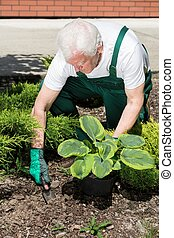 Gardener planting flower - Gardener is planning to plant his...